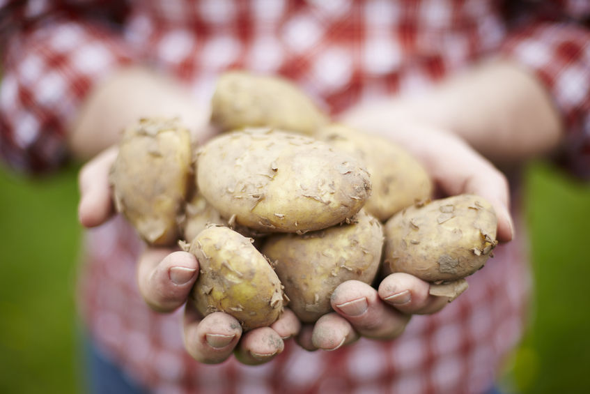 It can be easy to forget the humble potato