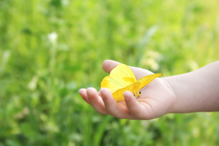 Building a butterfly haven in your garden