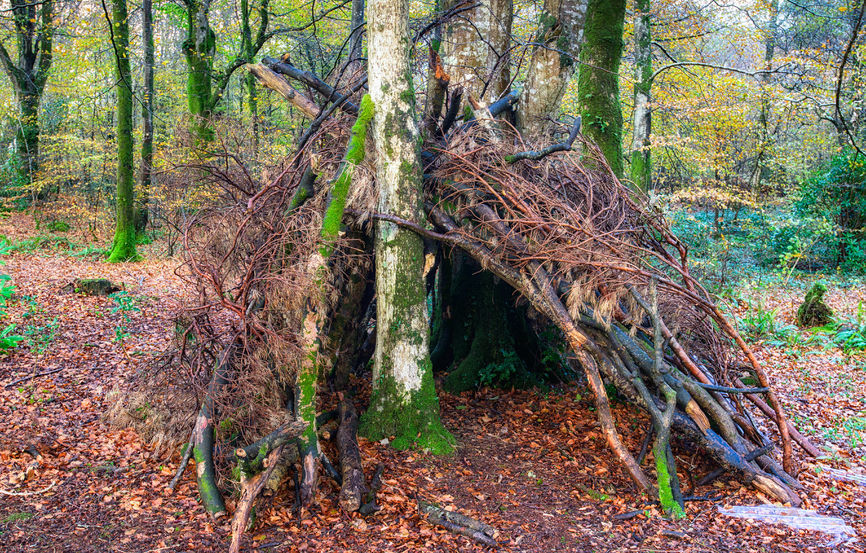 What do you need to build a den?