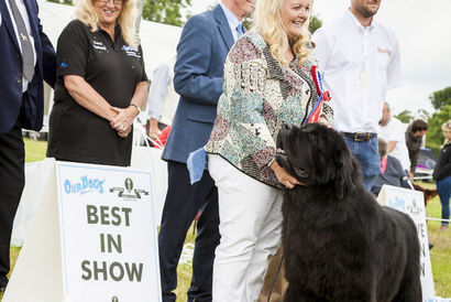 Traditional Hertfordshire Half term activity - The Herts County Show