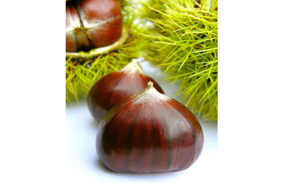 Chestnuts, in season and delicious…