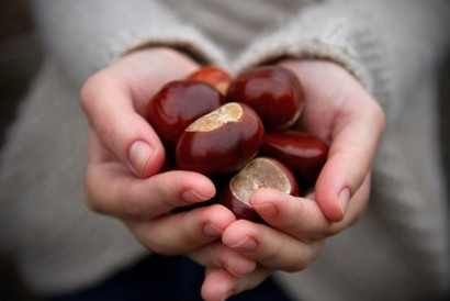 Conkers...