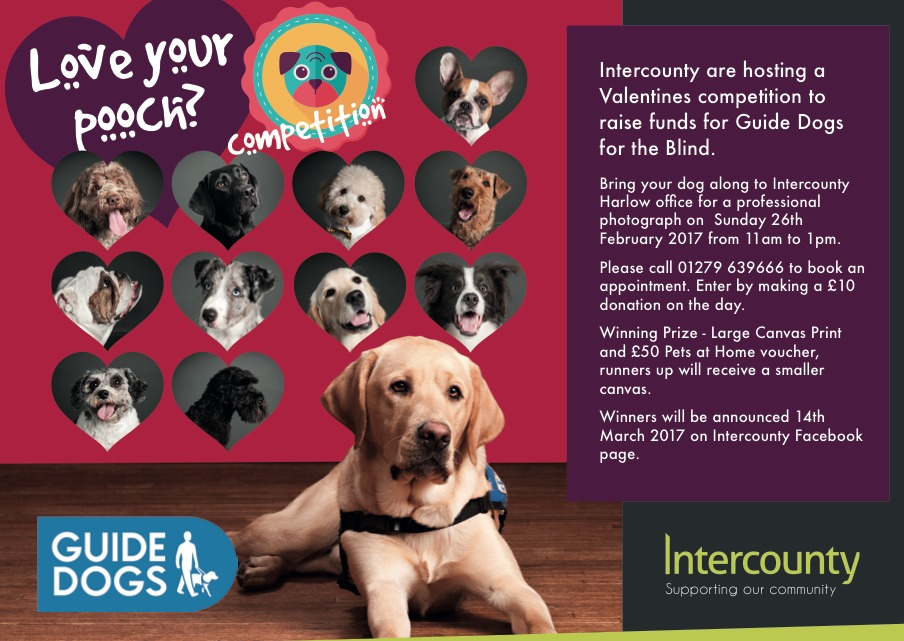 Last chance for Love Your Pooch competition…