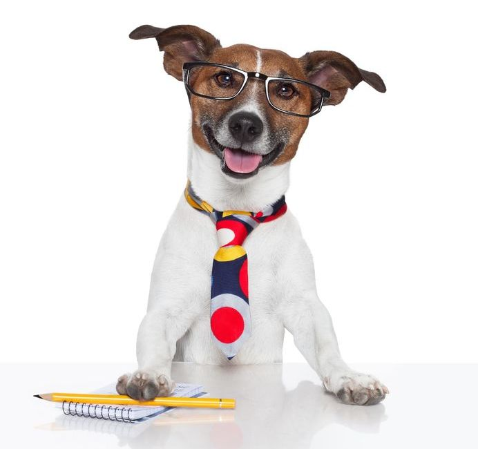 Bring your dog to work day - 23 June
