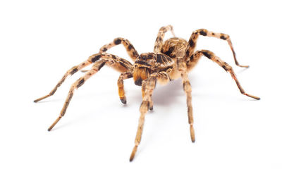 Keeping spiders out of your home