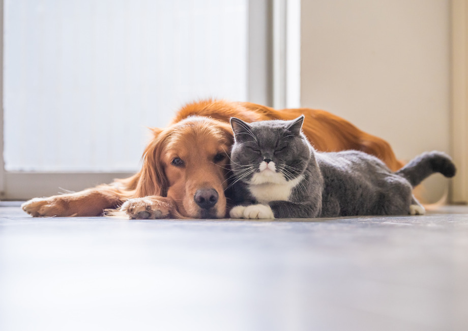 Stansted Landlords – Letting To Tenants With Pets