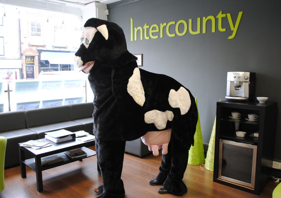 Intercounty Horse Around For Charity!