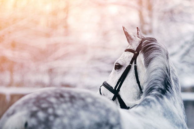 Christmas fun with Epping Forest Riders Association