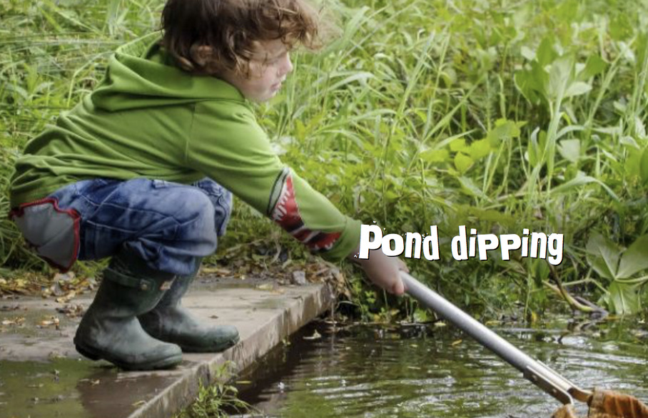 Pond dipping in Chigwell