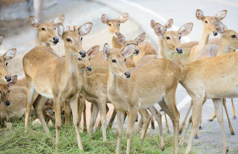 Visit a Deer Sanctuary