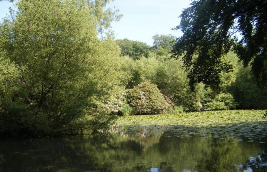 Discover Knighton Woods