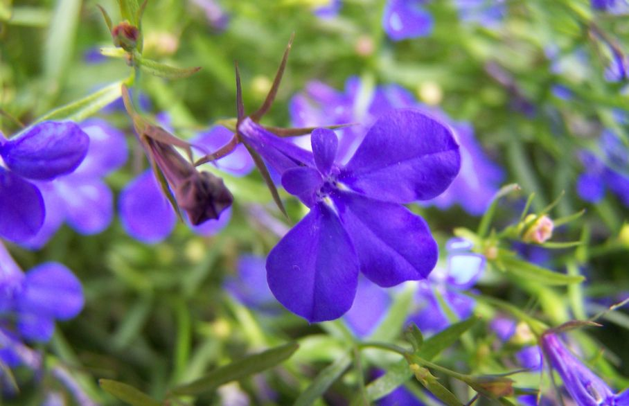 Lobelia and impatiens are good choices for a shady place