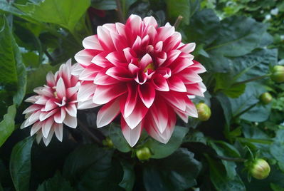 Tips for keeping your garden a focal point during October